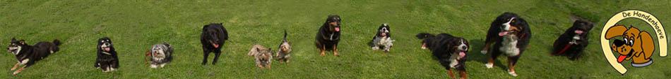 De Hondenhoeve